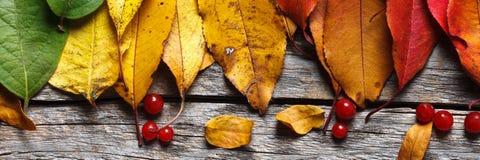 Lames d'automne color?es images libres de droits
