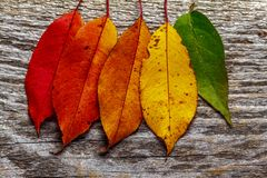 Lames d'automne color?es photographie stock libre de droits