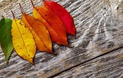 Lames d'automne color?es image libre de droits