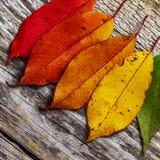 Lames d'automne color?es photo libre de droits