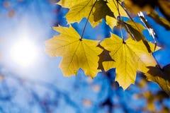 Lames d'automne colorées. Image stock