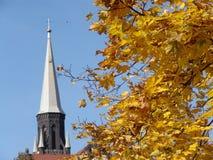 Lames d'automne d'or. Image libre de droits