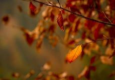 Lames d'automne d'or Images libres de droits