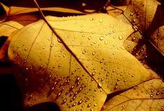 Lames d'automne d'automne Image stock