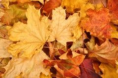 Lames d'automne d'automne Photographie stock