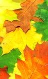 Lames d'automne d'automne - trame Photos stock