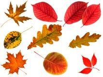 Lames d'automne d'isolement. Image stock