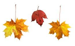 Lames d'automne d'isolement Photographie stock