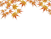 Lames d'automne d'isolement sur le blanc image stock