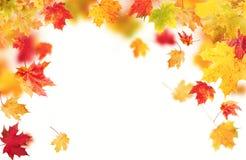 Lames d'automne d'isolement sur le fond blanc Images stock
