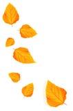 Lames d'automne d'isolement sur le fond blanc Photos stock