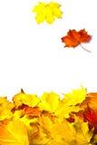 Lames d'automne d'isolement sur le fond blanc Photographie stock libre de droits