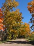 Lames d'automne dans l'â 04_10_2_033 de verticale Photos libres de droits
