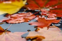 Lames d'automne dans l'eau Photos stock