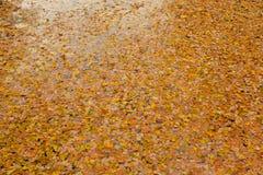 Lames d'automne dans l'eau photos libres de droits