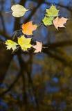 Lames d'automne dans l'eau Photographie stock libre de droits