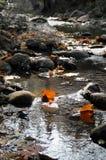 Lames d'automne dans l'eau Images stock