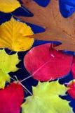 Lames d'automne dans l'eau Photo stock