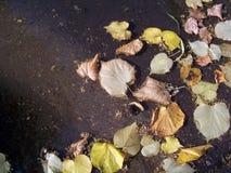 Lames d'automne dans l'eau Photographie stock