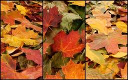 Lames d'automne dans la forêt Images libres de droits
