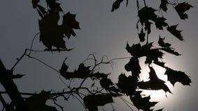 Lames d'automne dans le vent banque de vidéos