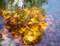 Lames d'automne dans un étang Images libres de droits