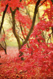 Lames d'automne dans une forêt image libre de droits