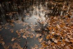 Lames d'automne de groupe dans l'eau Photo libre de droits