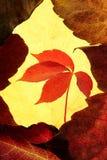 Lames d'automne en composition d'or de trame Images libres de droits