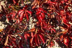 Lames d'automne en lumière de matin Photo stock