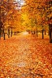 Lames d'automne en stationnement Photo stock