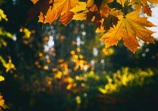 Lames d'automne en stationnement Photographie stock