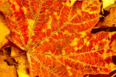 Lames d'automne en stationnement Images libres de droits