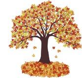 Lames d'automne et arbre - vecteur Photo stock