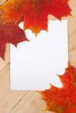 Lames d'automne et trame blanche Image libre de droits