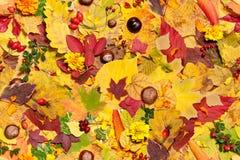 Lames d'automne, fond sans joint Photos stock