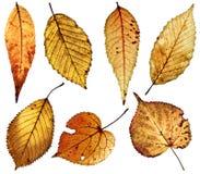 Lames d'automne grunges sur le blanc Photo stock