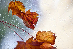 Lames d'automne humides Image stock
