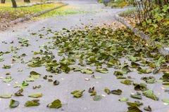 Lames d'automne jaunes Photo libre de droits