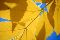 Lames d'automne jaunes Photographie stock