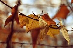 Lames d'automne jaunes Photo stock