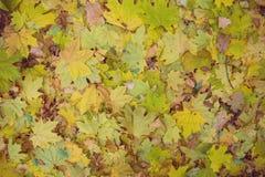 Lames d'automne jaunes photos libres de droits