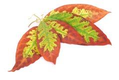 Lames d'automne lumineuses Image libre de droits
