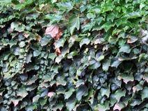 Lames d'automne multicolores Images stock