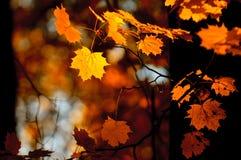 Lames d'automne, orientation très peu profonde Images libres de droits