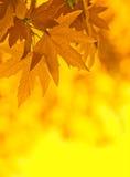 Lames d'automne, orientation très peu profonde illustration libre de droits