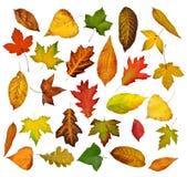 Lames d'automne réglées. Photographie stock libre de droits