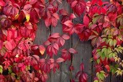 Lames d'automne rouges Photographie stock libre de droits