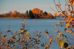 Lames d'automne rouges au lac Photo libre de droits
