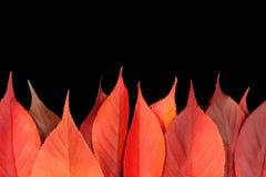 Lames d'automne rouges formant une flamme de firey Image libre de droits